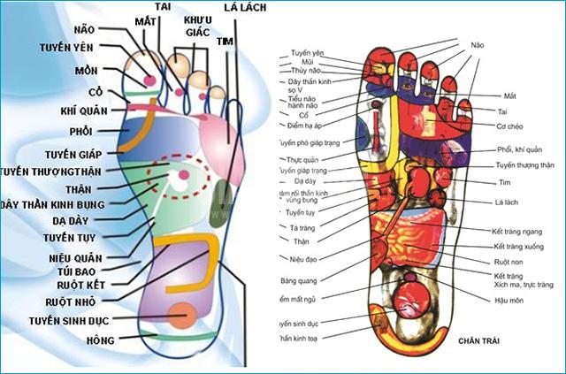 Huyệt phản chiếu ở gan bàn chân